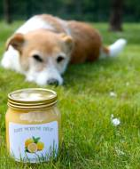 Lemon curd and dog